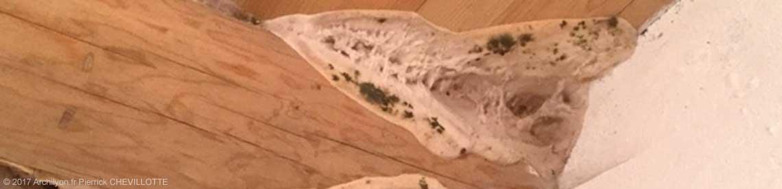 reconnaitre merule photos champignon